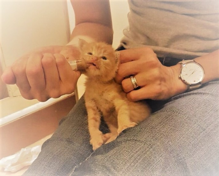 20161203 Orange Kitten (Muthaiga North)
