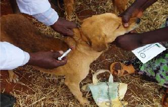rabies-vaccin-2
