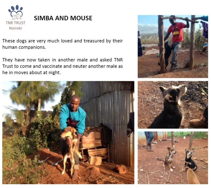 04. Simba and Mouse