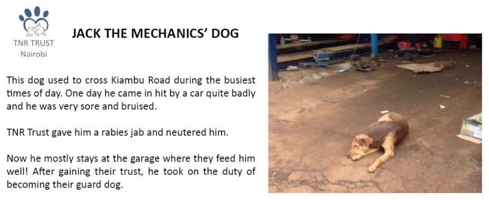 05. Jack the Mechanics dog