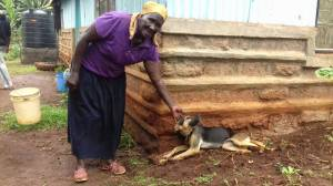 Simba, reunited with his owner after being checked by TNR Trust and vaccinated against rabies