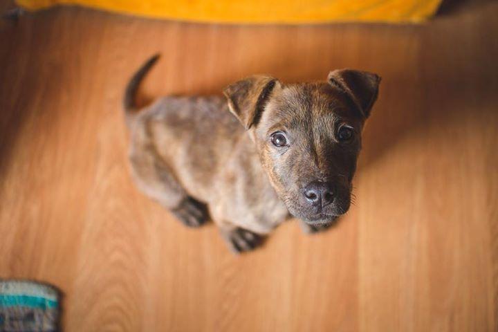 Katie puppy