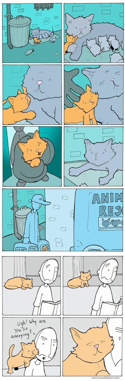 Mama Cat.jpg