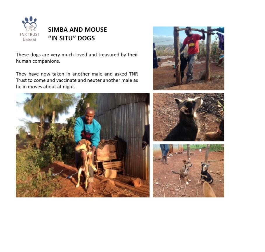 04. Simba and Mouse.jpg