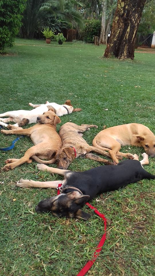 20171008 Foster pile up