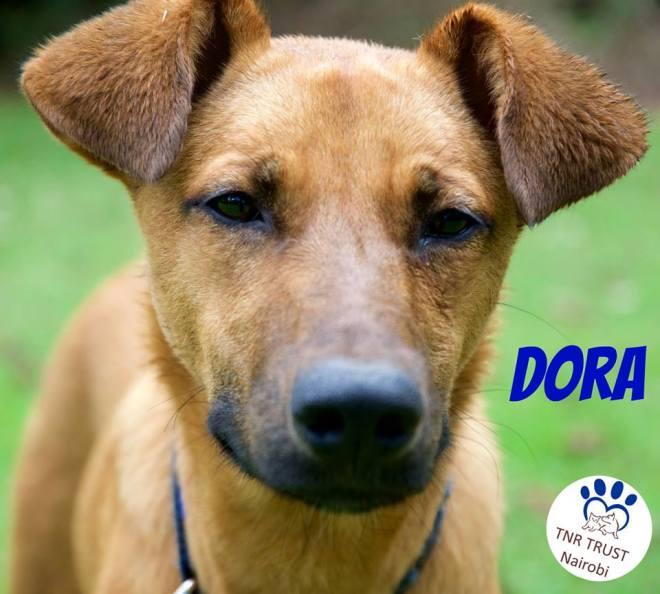 20171122 Dora 2
