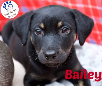 Bailey 221117 with logo
