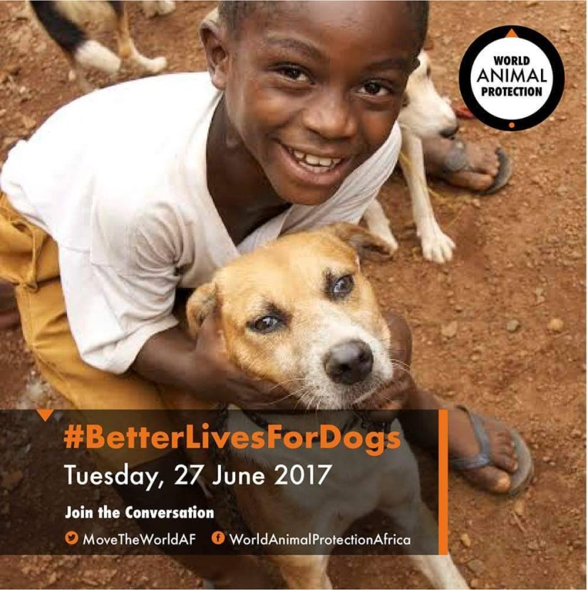 World Animal Protection: #BetterLivesForDogs