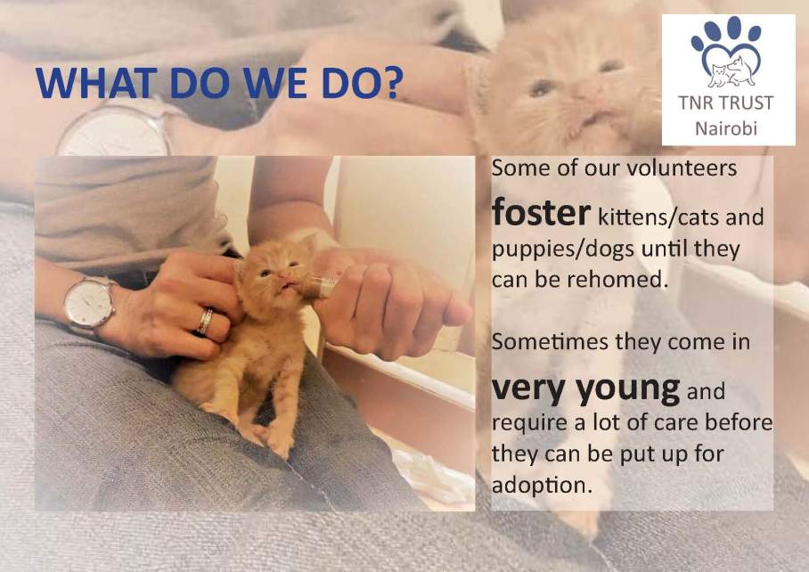 TNR - what do we do posters_Page_01