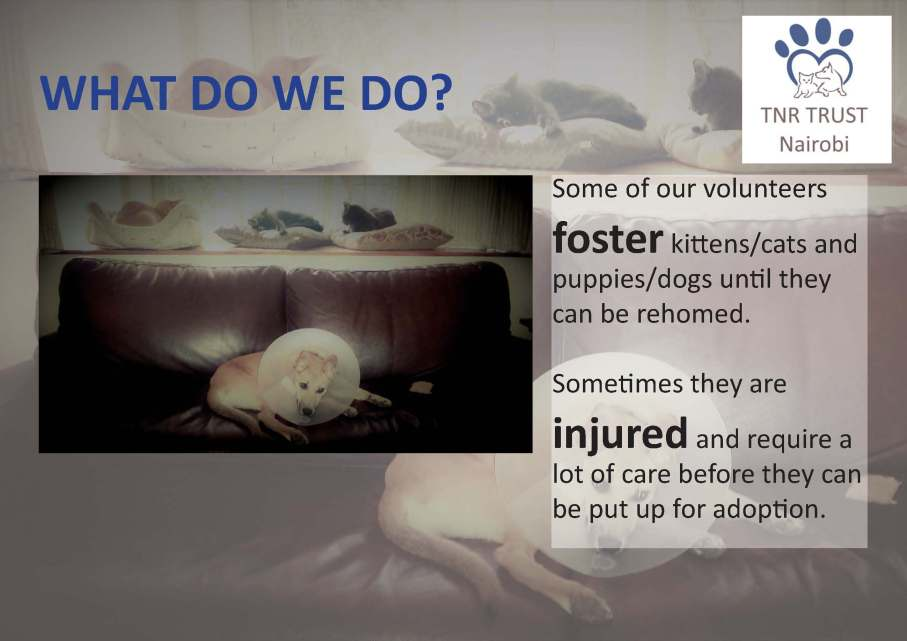 TNR - what do we do posters_Page_02