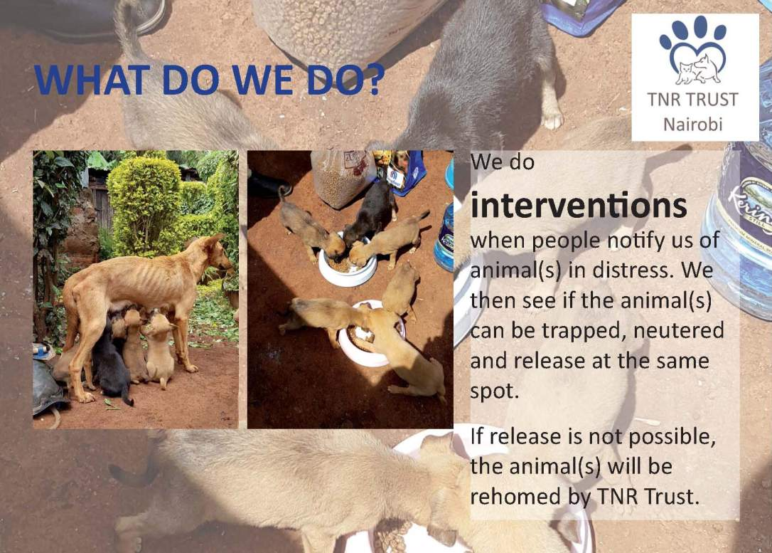 TNR - what do we do posters_Page_05