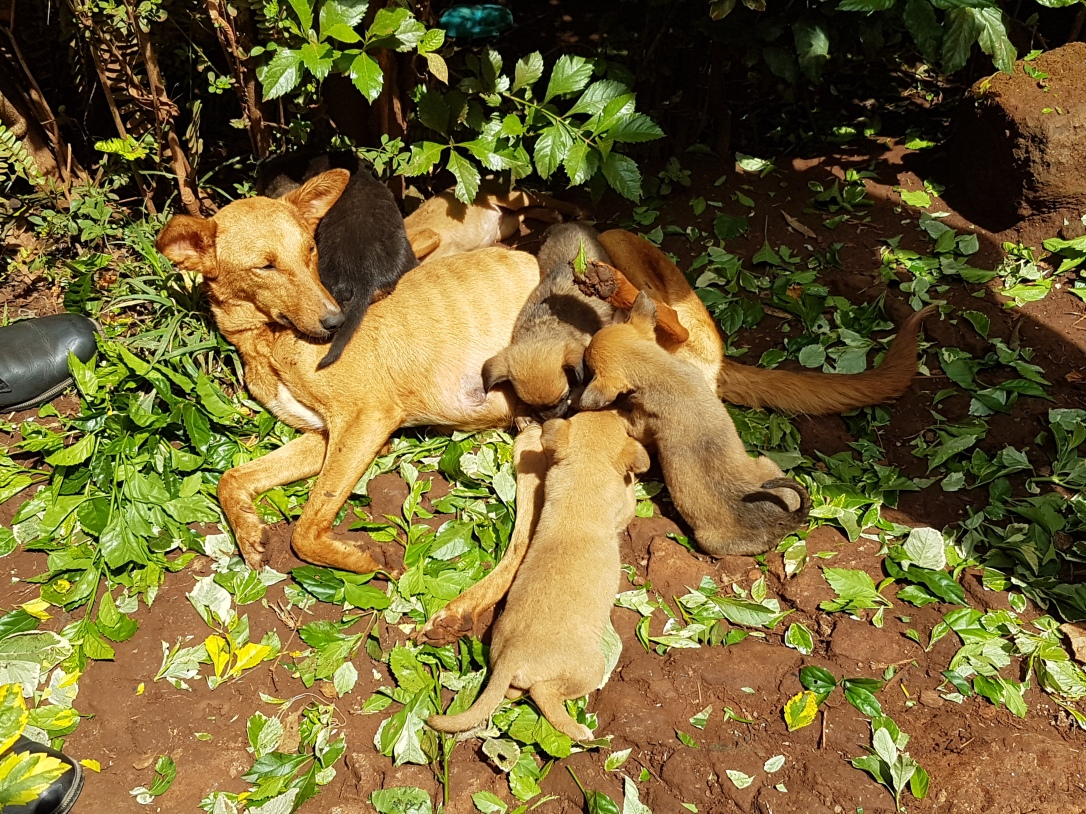 Katie was near death from malnourishment, yet she was still an amazing mum to all her 6 pups