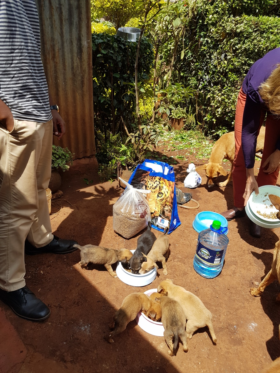 Katie had given everything she had to the pups, but they were still very hungry! TNR Volunteers gave them some water and puppy food upon arrival