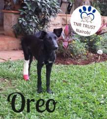 20170525 Oreo