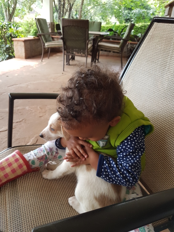 The child of one of our volunteers also became involved with socializing - a way for puppies/dogs to get used to humans