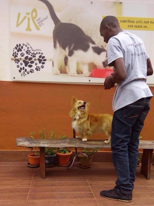 A volunteer taking a dog for grooming