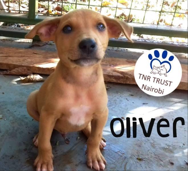 20171030 Oliver