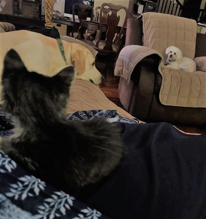 Isabella Adopted!