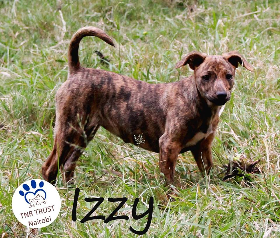 Izzy adopted