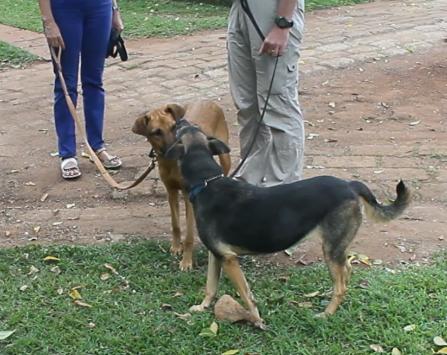 Dora and Wangari socializing at their mutual foster home