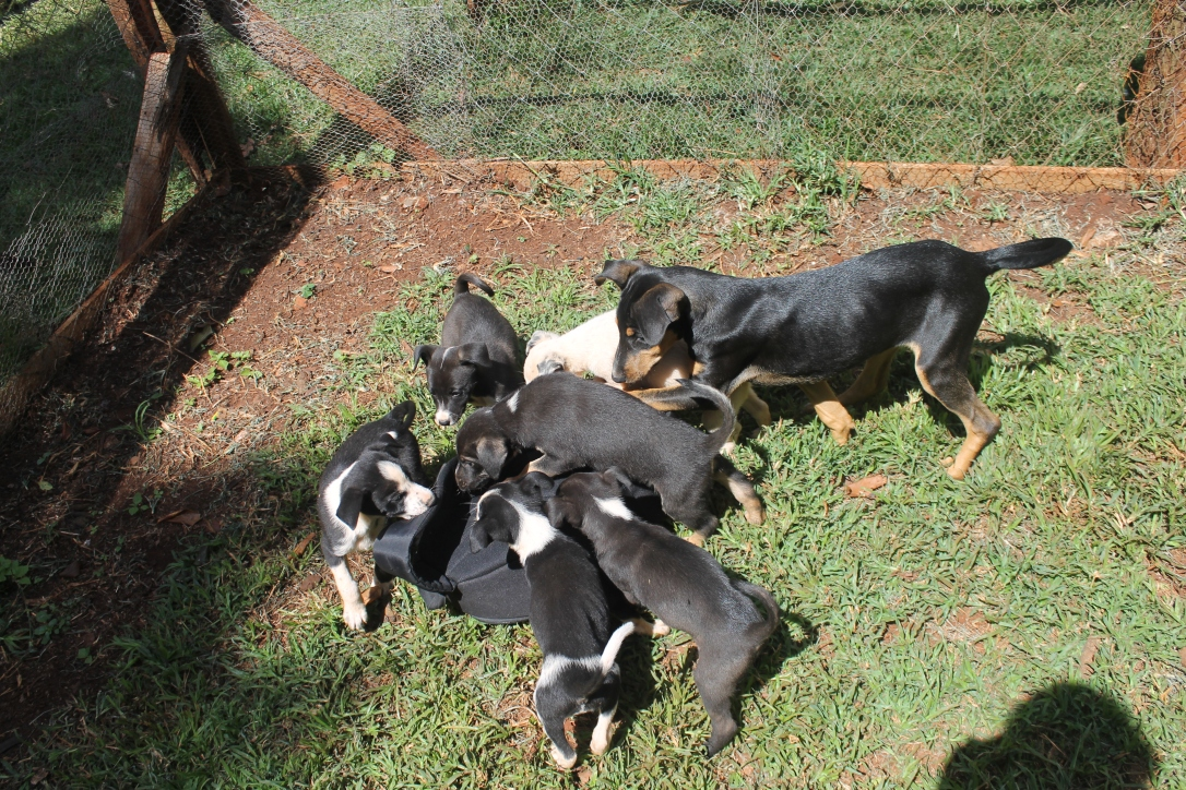 Play and Socializing at foster homes is important