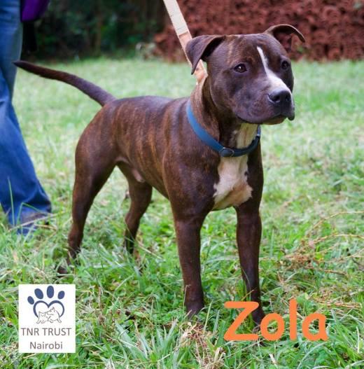 20180105 Zola