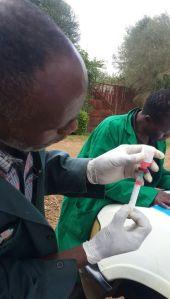 TNR Trust Rabies Vaccination Campaign in Kiambu County