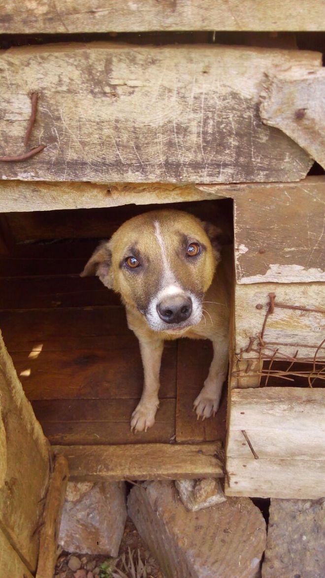 A guard dog in rural area (Kenya)