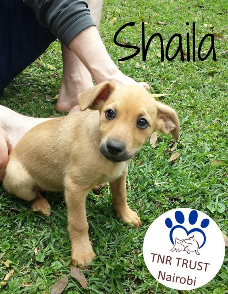 Shaila 201708