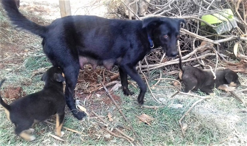Timmy and pups when we found them at the construction site