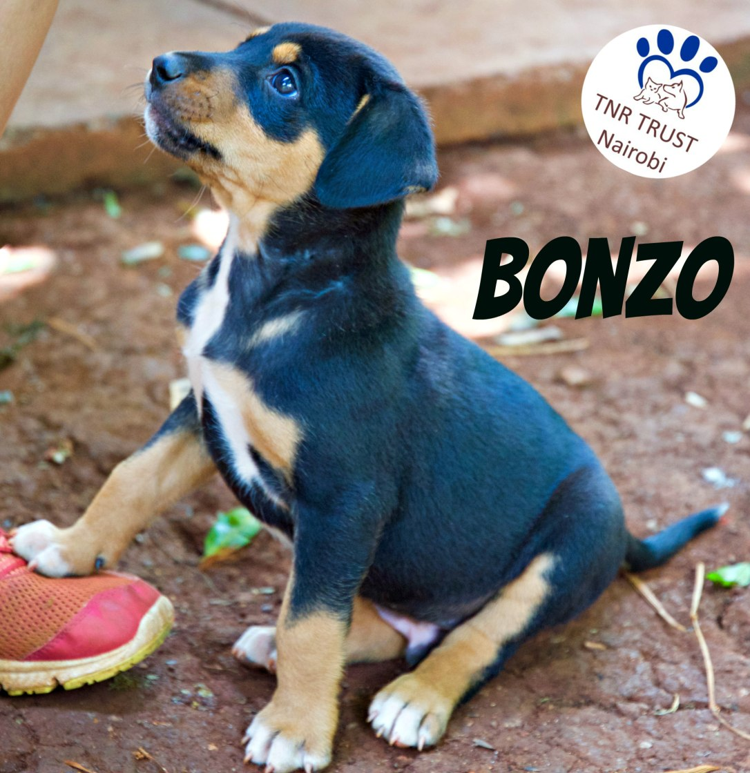20180218 TimmyPup_ Male1 (BONZO) WITH LOGO