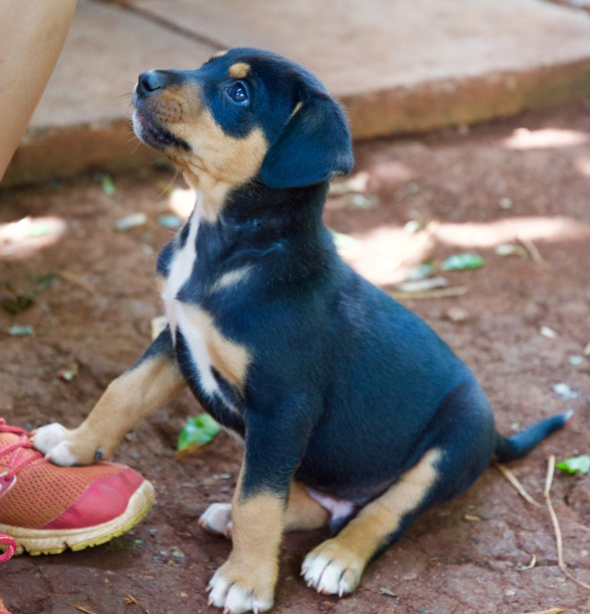 Male Pup 1