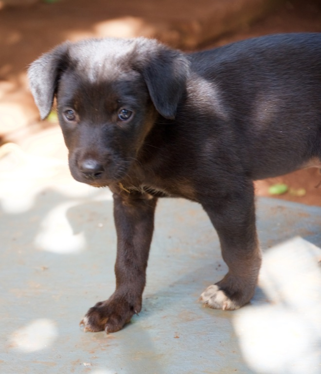 Male Pup 3