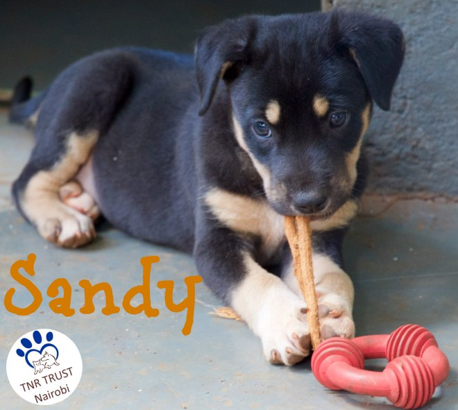Sandy male with logo