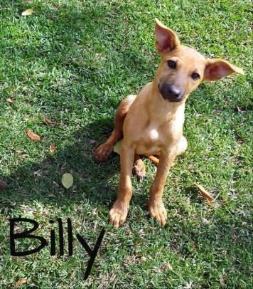 20171001 Billy