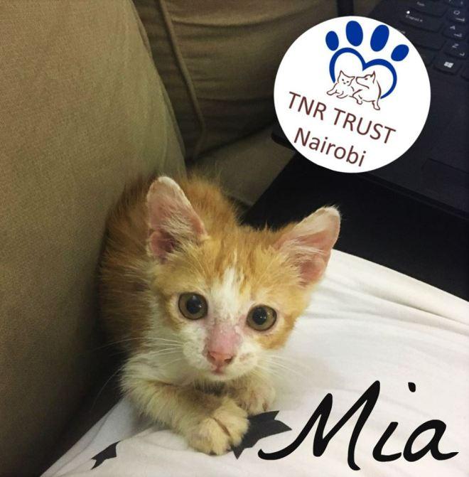 Teensy Tiny Mia when she had just arrived into TNR Care