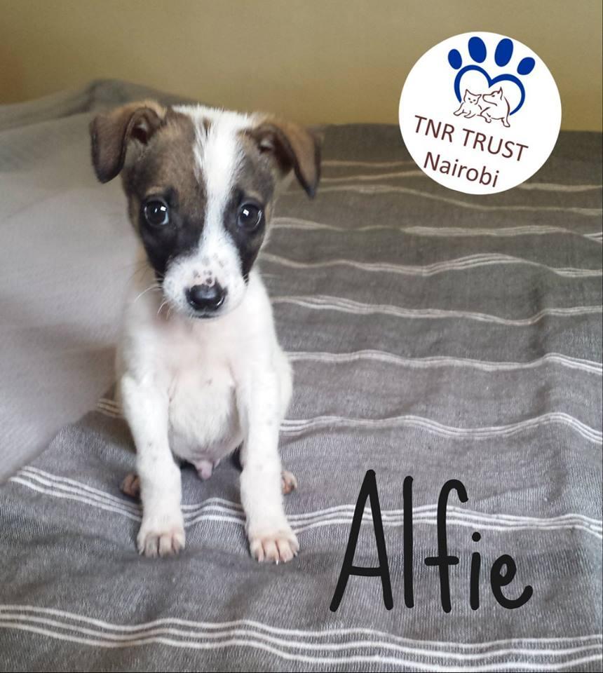 20180312 Alfie logo