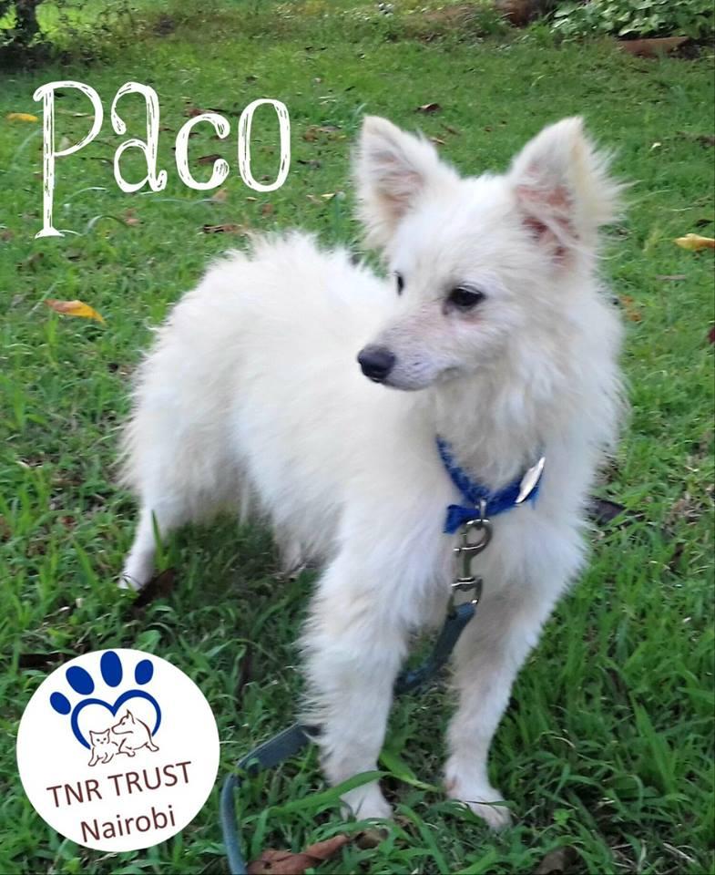 20180314 Paco logo.jpg