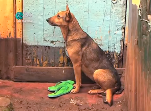 Early every morning, Oscar can be found waiting patiently at the door of the home of Mbugua's and Wanjiku's grandmother