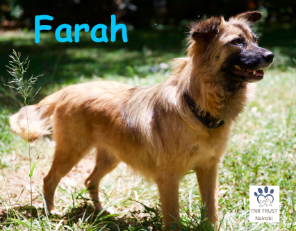 Farah poster photo.png