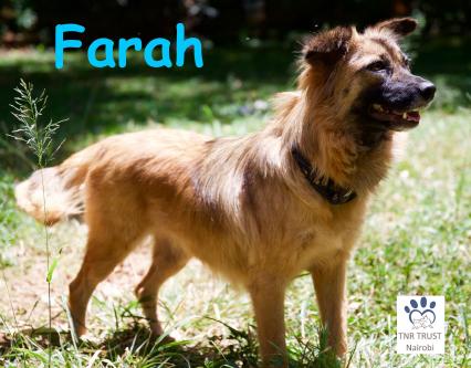 Farah poster photo.png