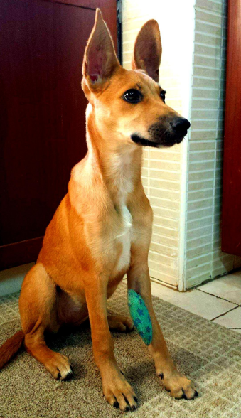 Jaya was found with 2 broken bones, so her leg had to be pinned for quite a while