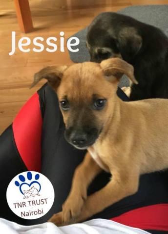 Jessie 20170620