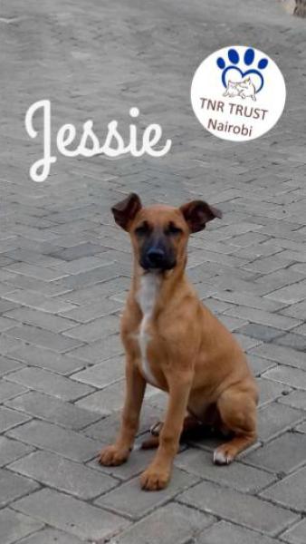 Jessie 20170621