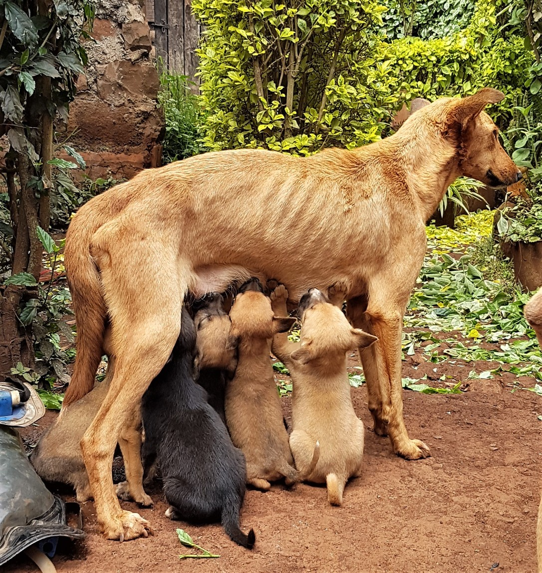 Katie was a stray that had wandered in the compound of a low-income family to give birth