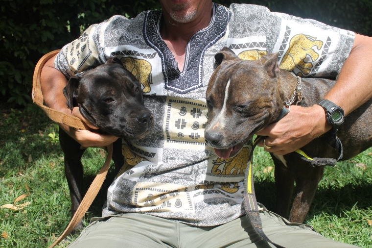 Tough-looking dogs but very keen on cuddles with our volunteers