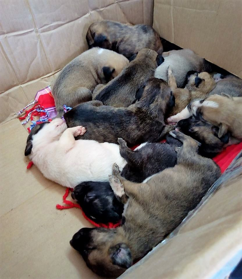 A BIIIG Box of Puppies