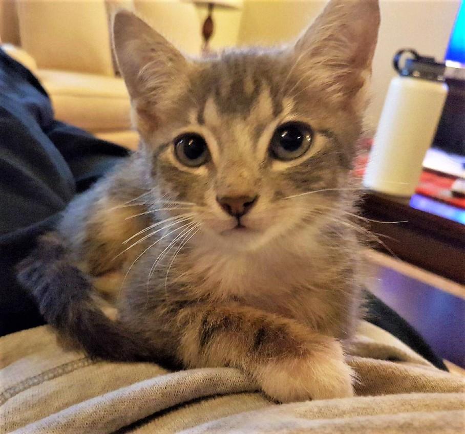 Harvey is still up for adoption