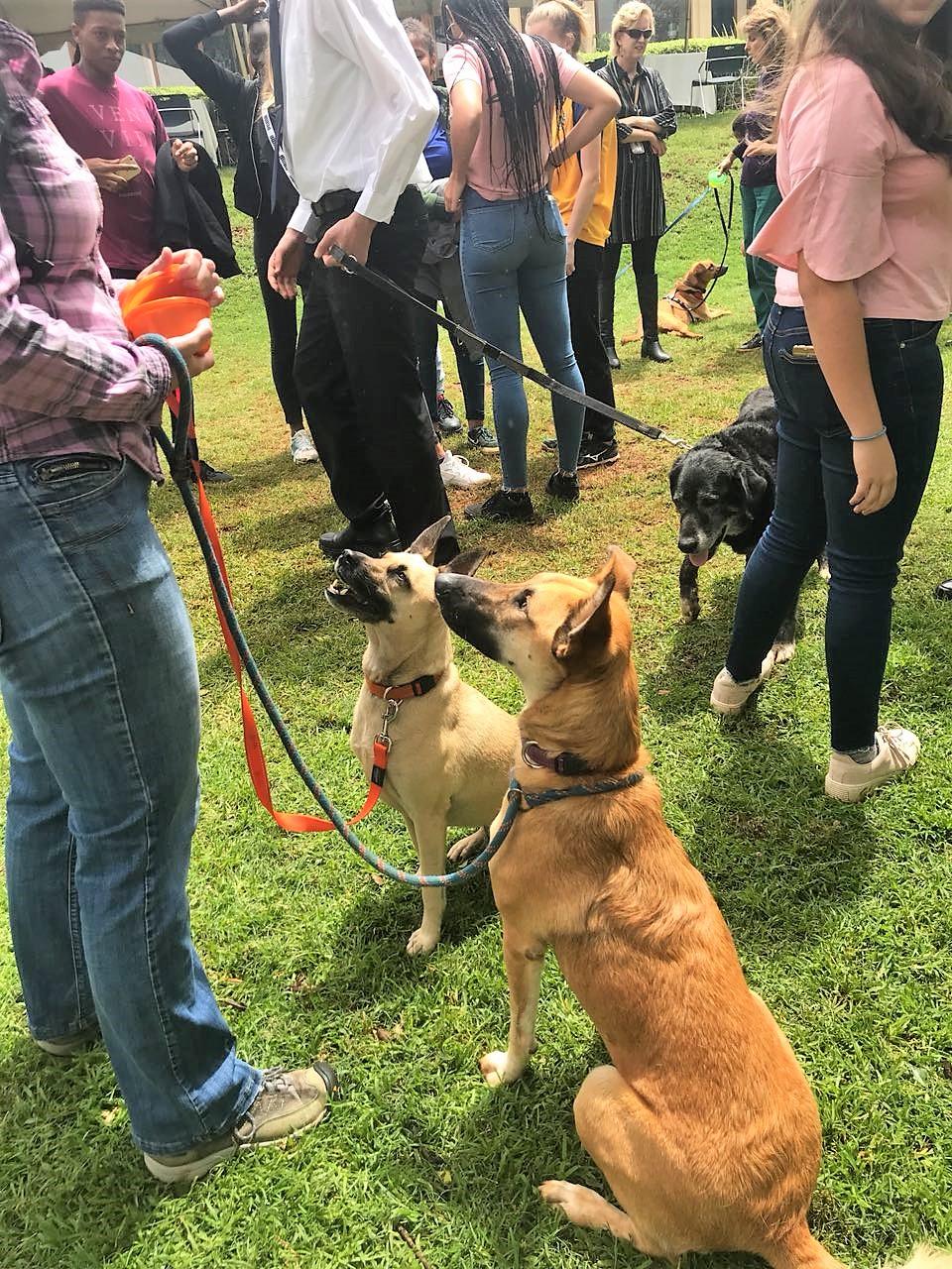 Pinda and Korneel in full anticipation of treats. Korneel was adopted from TNR Trust