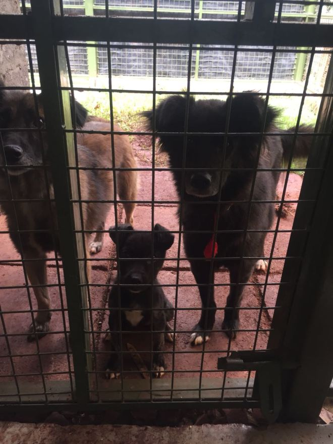 When we have extra space in our kennels, we collaborate with KSPCA and take some dogs from their kennels. These lucky furries will then have more opportunities to interact with humans and other animals